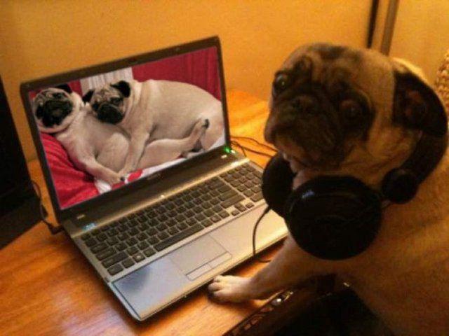 Cachorro na frente do notebook e na tela um cachorro em cima do outro