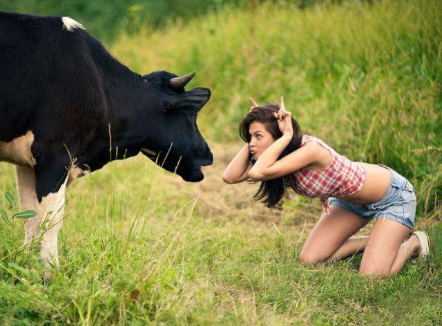 gostosa imitando uma vaca no pasto. Ela esta de frente para uma vaca.