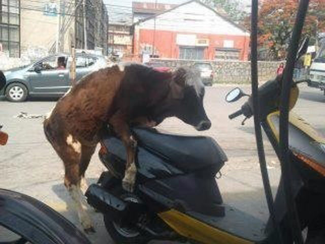 pobre moto