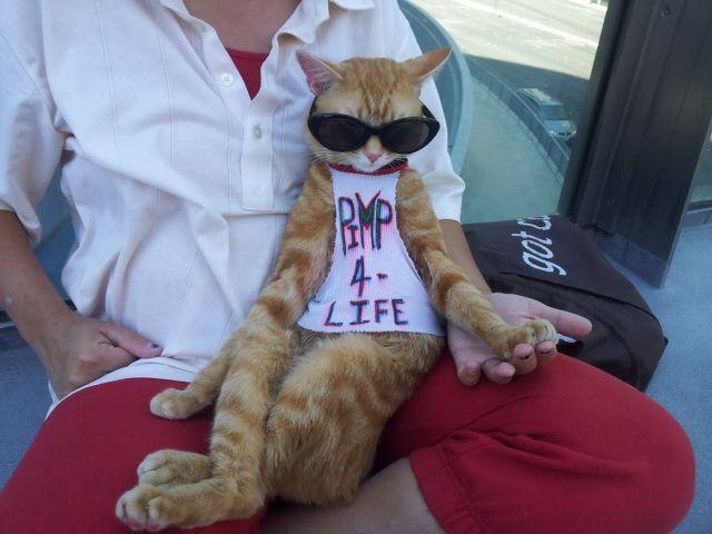 Gato de oculos