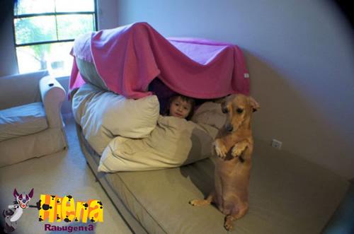 cachorro acamapando