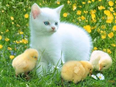 animais imagem facebook