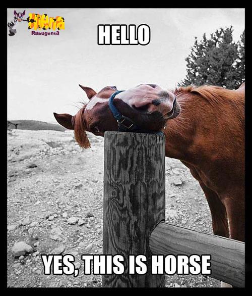 alô horse