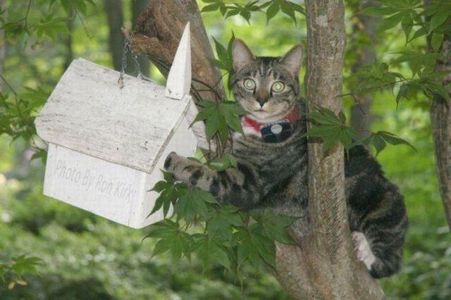 Gato em cima de uma arvore olhando uma casa de passsarinho.