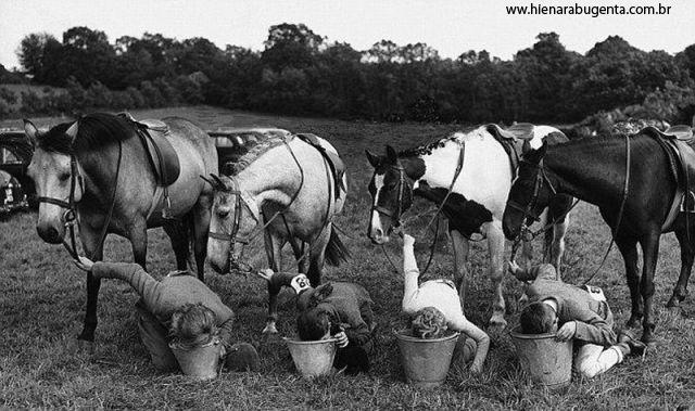Cavalos parados normalmente e humanos bebendo em baldes