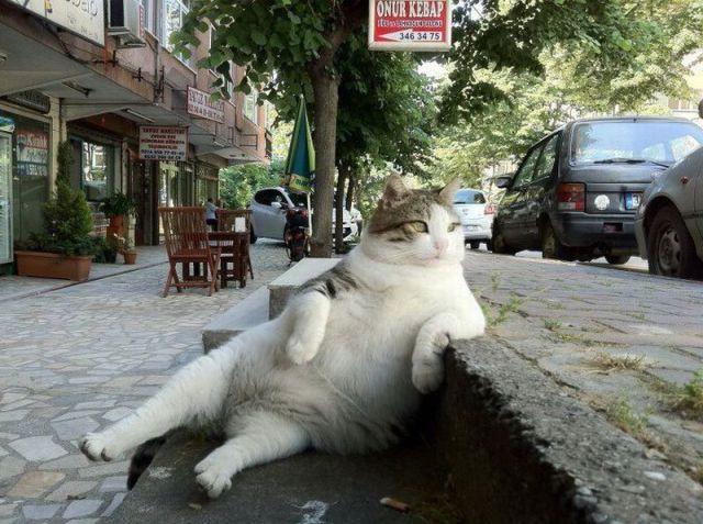 gato sensualizando