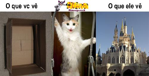 gato engracado