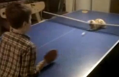 ping pong com o gato