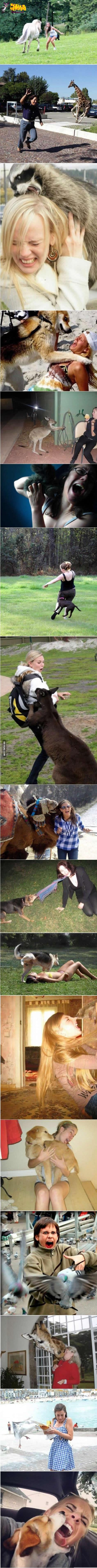 jeito com animais 2